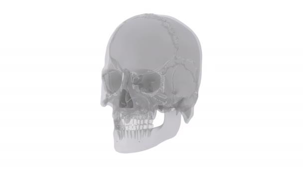 Lidská lebka s částmi kosti