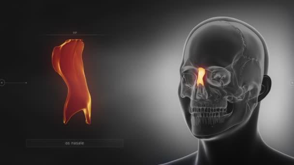huesos nasales del cráneo humano — Vídeos de Stock © CLIPAREA #125334786