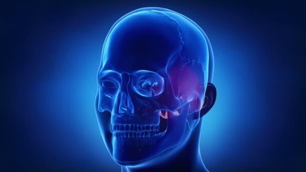 lidská lebka týlní kost