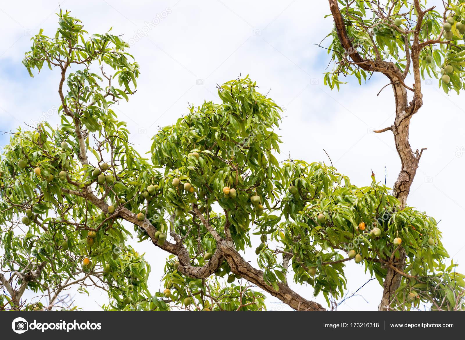стала фото и названия деревьев кубы получилось, что
