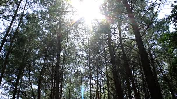 Great sunshine and lens flare in the forest, Marmaris