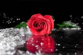 Fotografie red rose with water drops