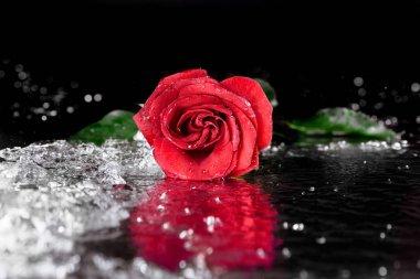 "Картина, постер, плакат, фотообои ""красная роза с каплями воды"", артикул 152758800"