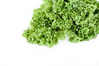 green lettuce salad leaves