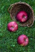 Čerstvá zralá jablka v trávě