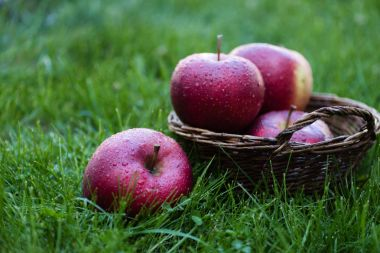 fresh picked red apples