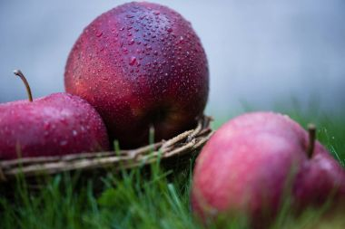 Fresh ripe apples in grass