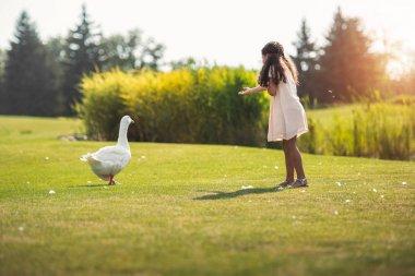 girl feeding geese in park