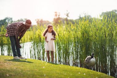 Granddaughter and grandfather feeding goose