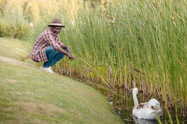 african american man feeding swan
