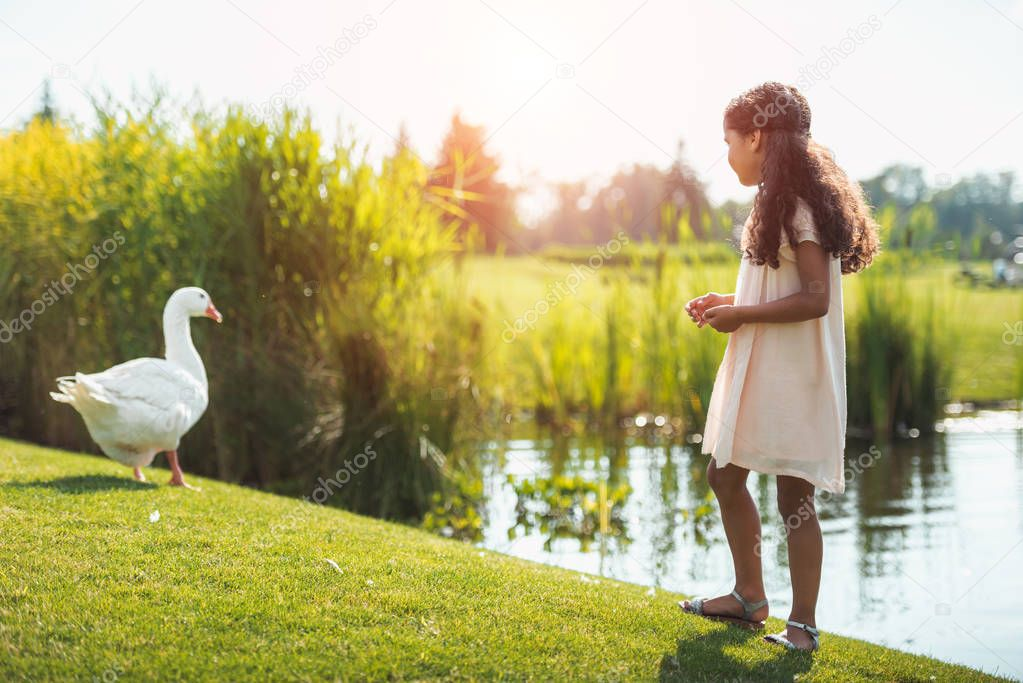girl feeding goose near lake