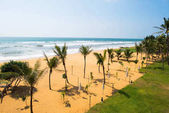Fotografie pobřeží s palmami