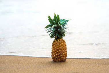 pineapple standing on sandy beach