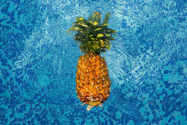 Pineapple floating in blue water of swimming pool stock vector