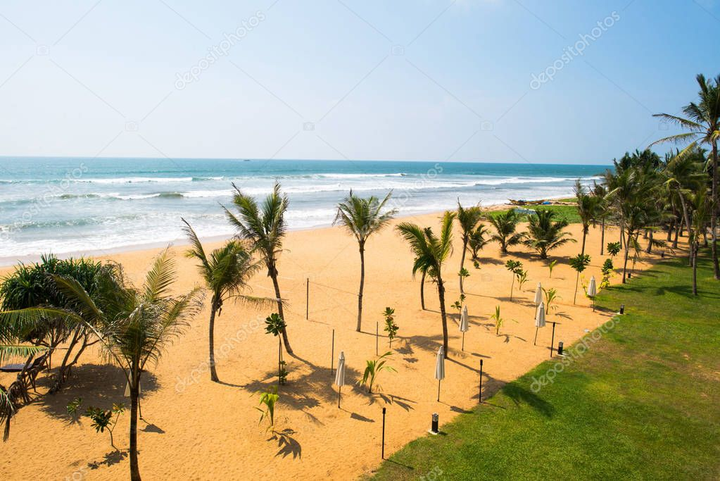 seashore with palm trees