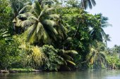 tropical trees over river
