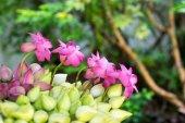 Fotografie lotosové květy