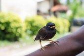 Photo black bird sitting on hand