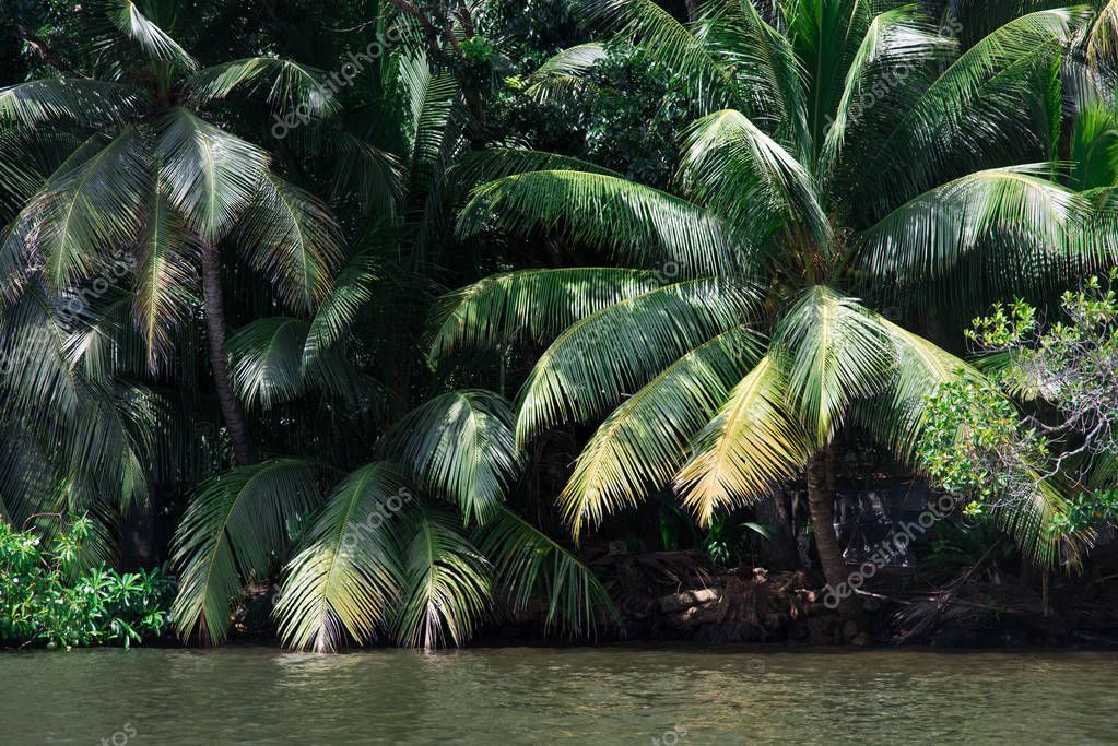 palms over river