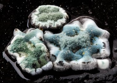 Blue and green mold