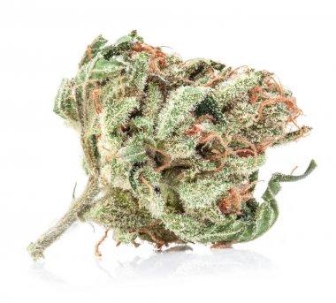 Medical marijuana isolated on white background