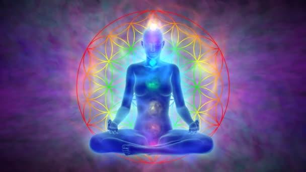 Meditace - květ života