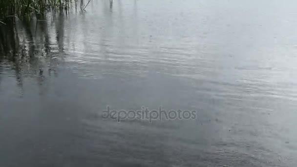 A hullámok, az eső, a merülés hal és a pillangók.