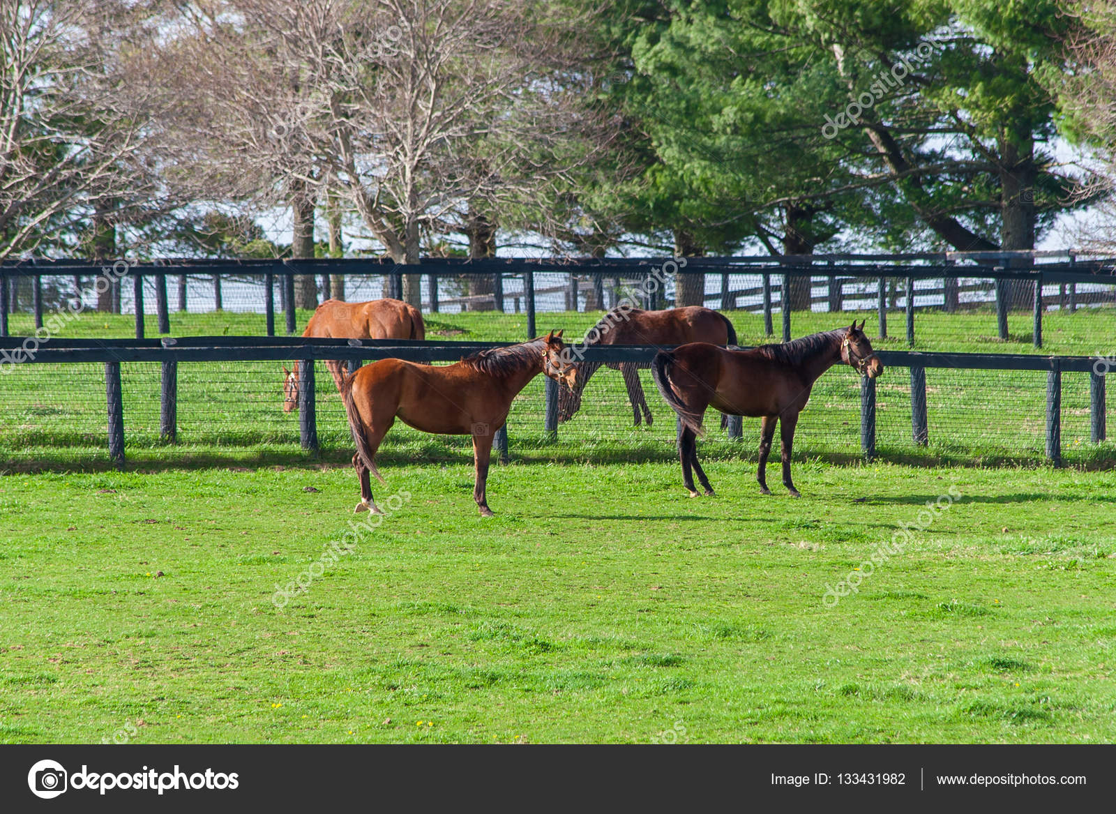Horses at horse farm country landscape stock photo for Horse farm