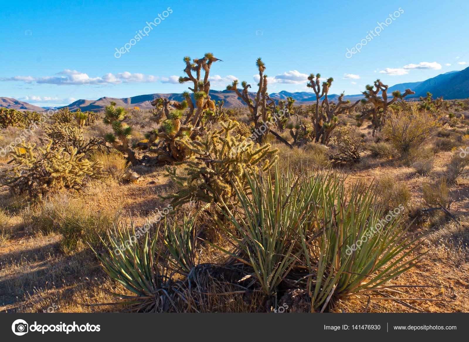 desert landscape in nevada usa stock photo volgariver 141476930