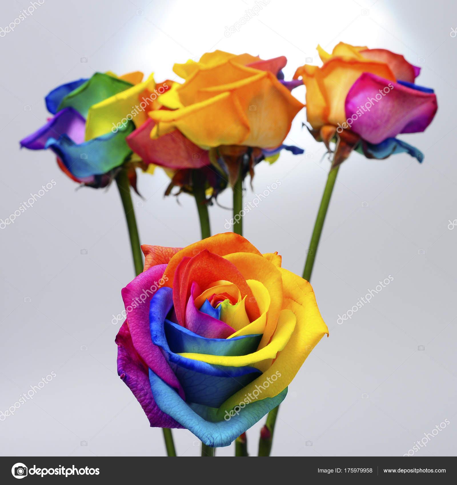 Bouquet De Rose Arc En Ciel Photographie Fullempty C 175979958