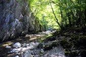 Alberi di primavera e del fiume di Annecy