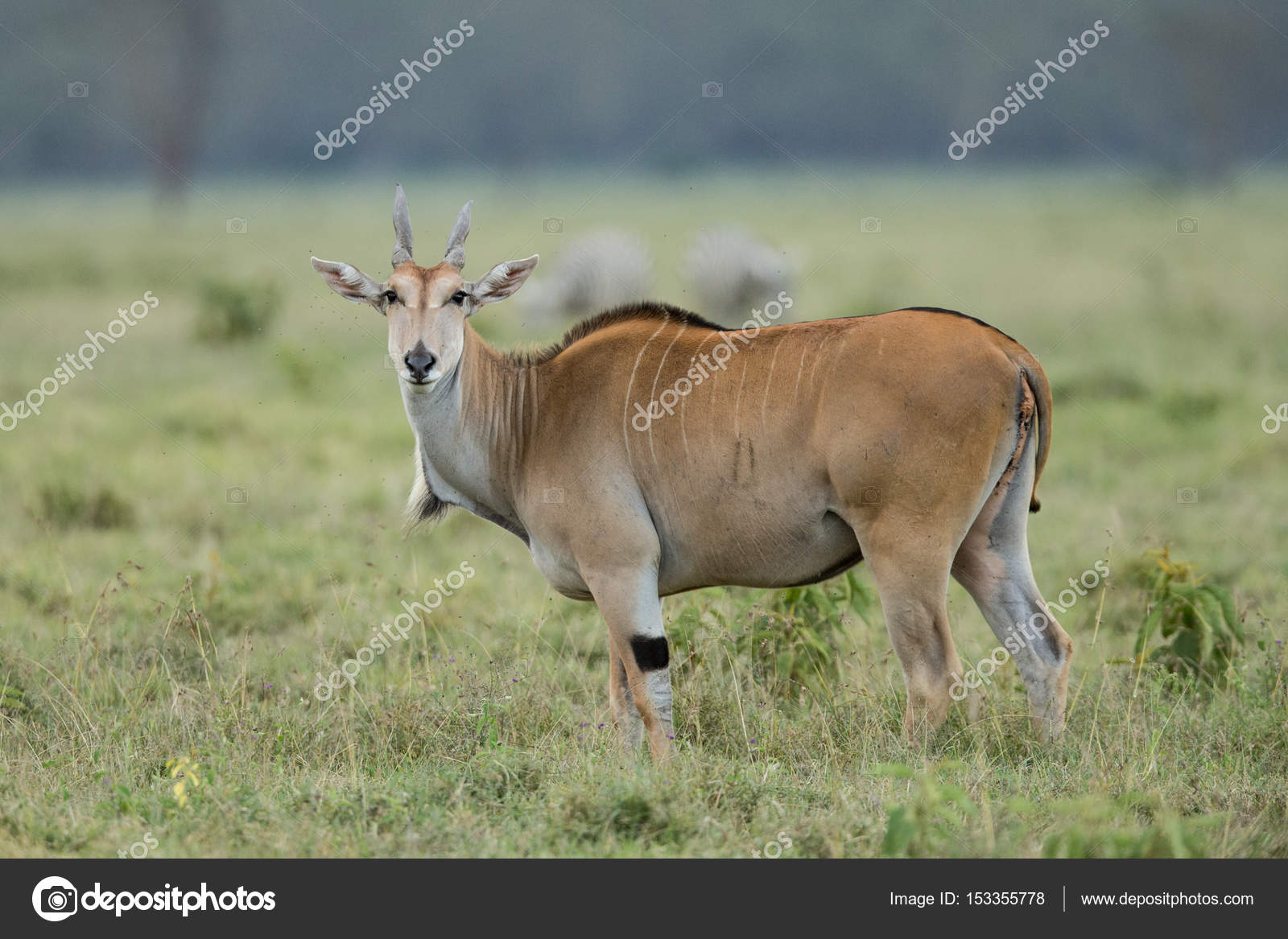 antelope chat Antelope/gazelle species that can be fed by the public in zoos what antelope/gazelle species are suitable choices for being fed compound feed by guests in zoos and then i mean suitable species, both in.