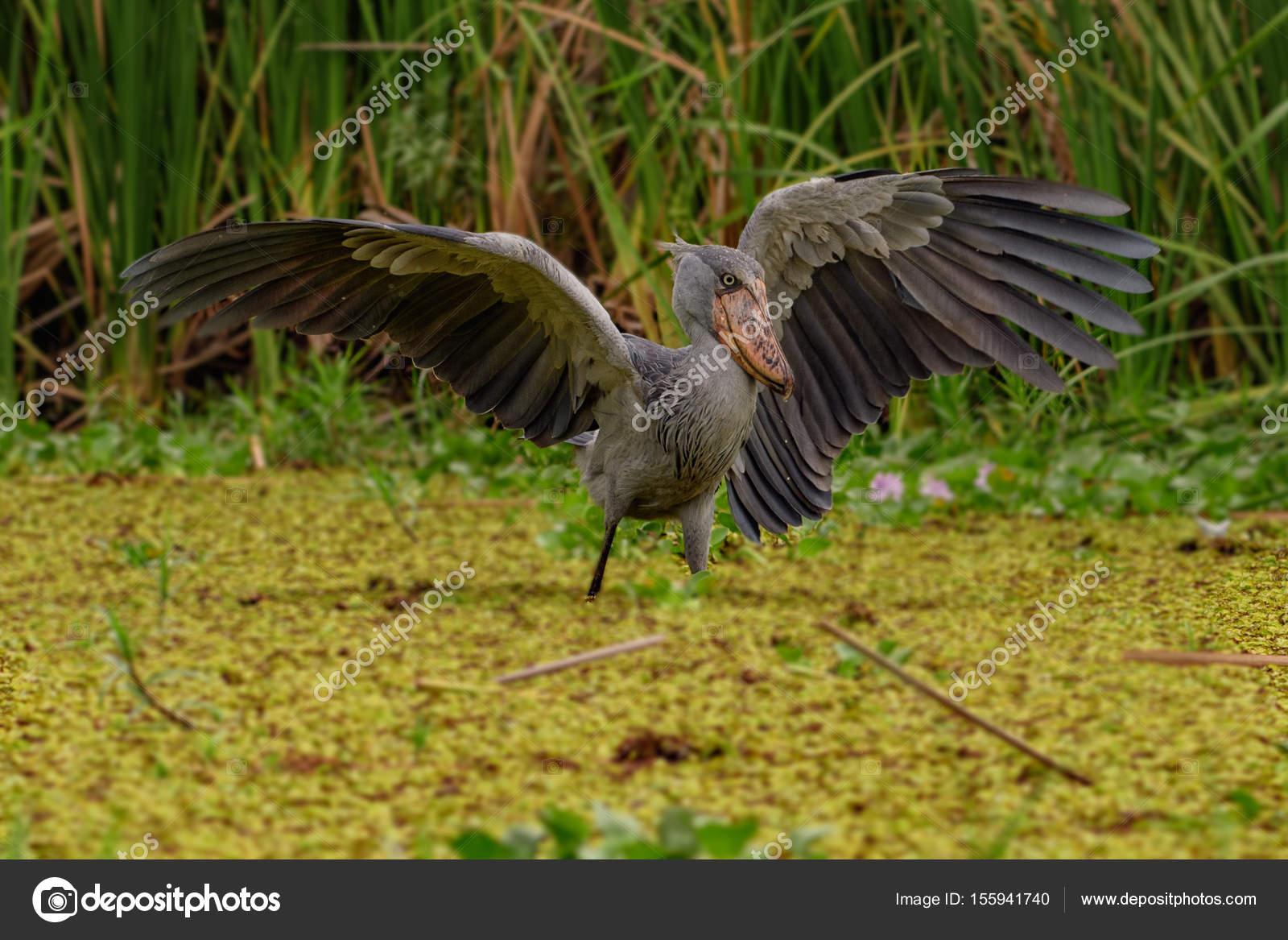 Μεγάλο πουλί που απεικονίζεται