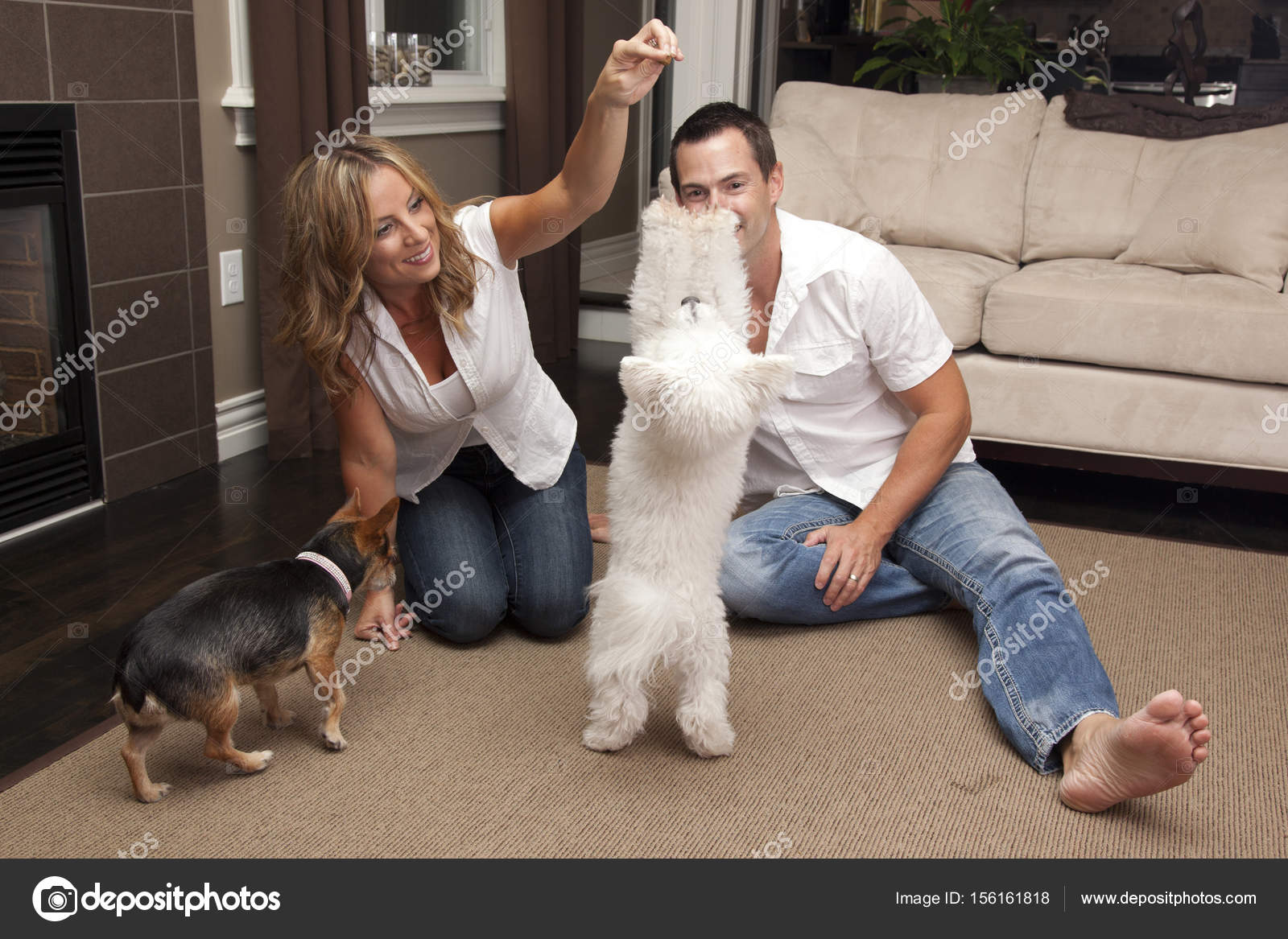 Dog training at home - what to do and where to start 23
