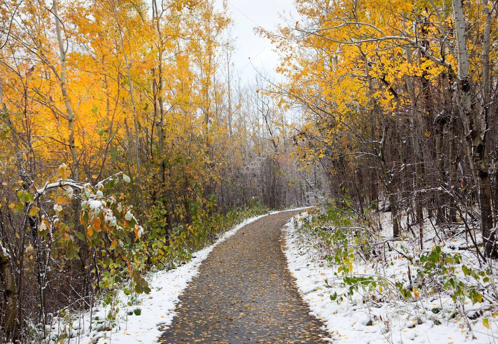 winter autumn road