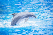 Photo Side view of a beautiful bottlenose dolphin jumping out of the water. Beautiful ocean animal in an idyllic setting
