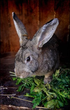 Cute rabbit in cage with grass, bun portrait, animals world