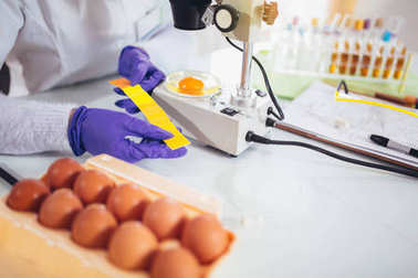 Quality control expert inspecting at chicken eggs in laboratory