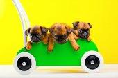 Fotografie drei Gänsegeier in Holz Auto