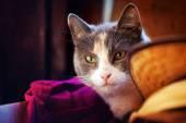 Fotografie lustige Wildkatzen Porträt