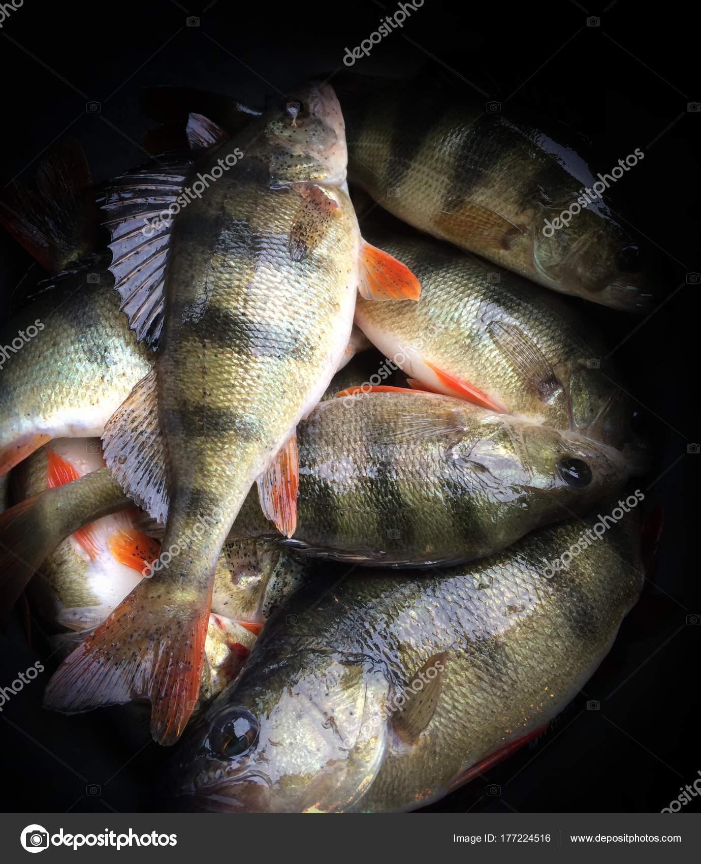 Wallpapers Hd Bass Fishing Bass Fish Texture Astrakhan Stock Photo C Gorlov 177224516