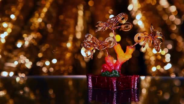 Video peníze strom Bonsai