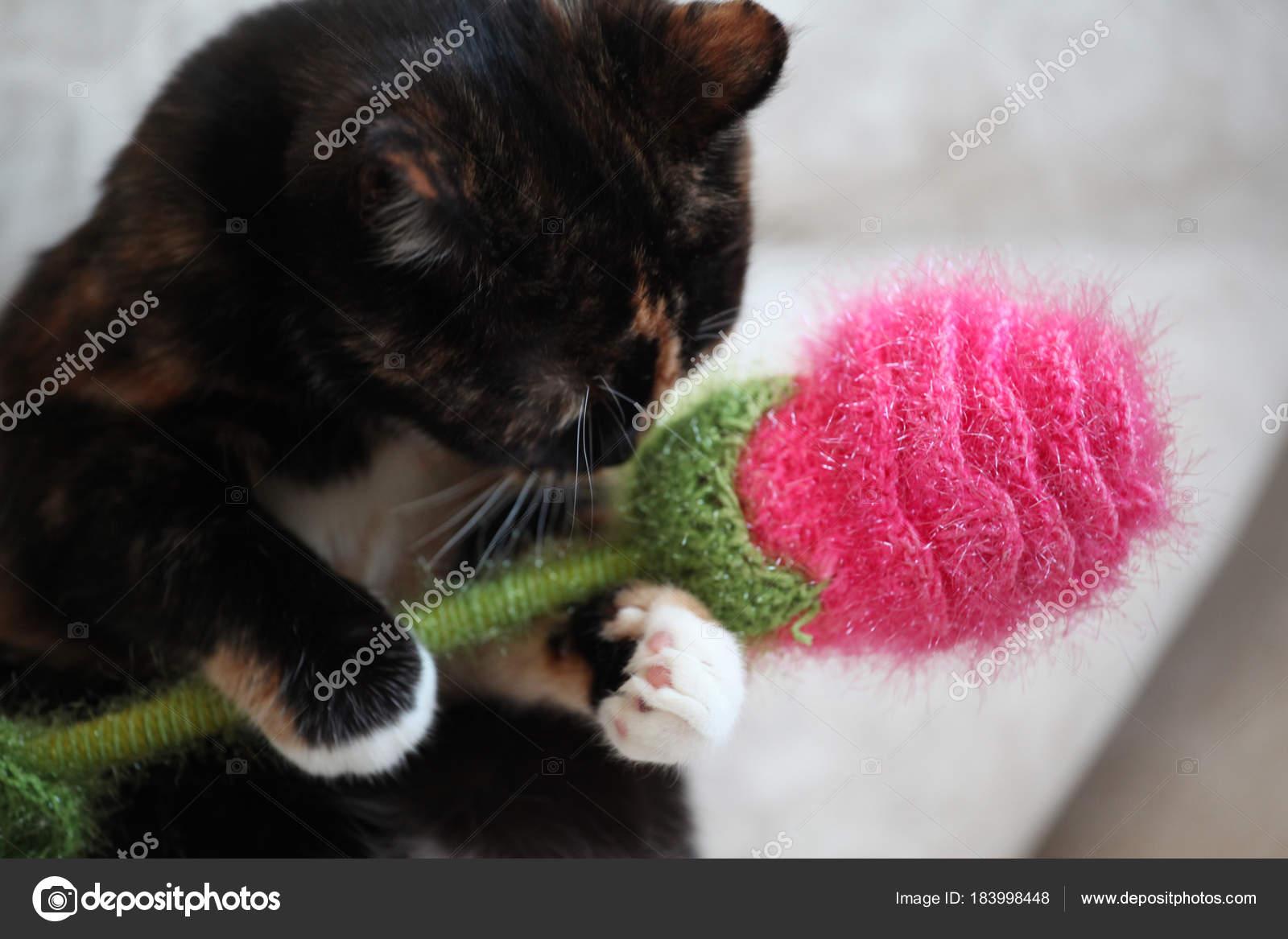 Katze Blume Wolle Spielen Wohngebäude — Stockfoto © GORLOV #183998448