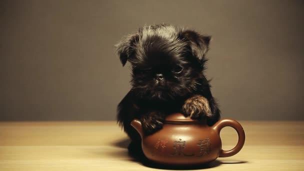 černá puppy konvice dřevěný stůl hd záběry