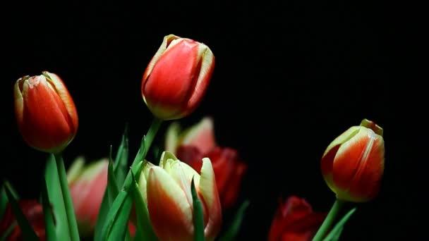felvételek virág sötét háttér