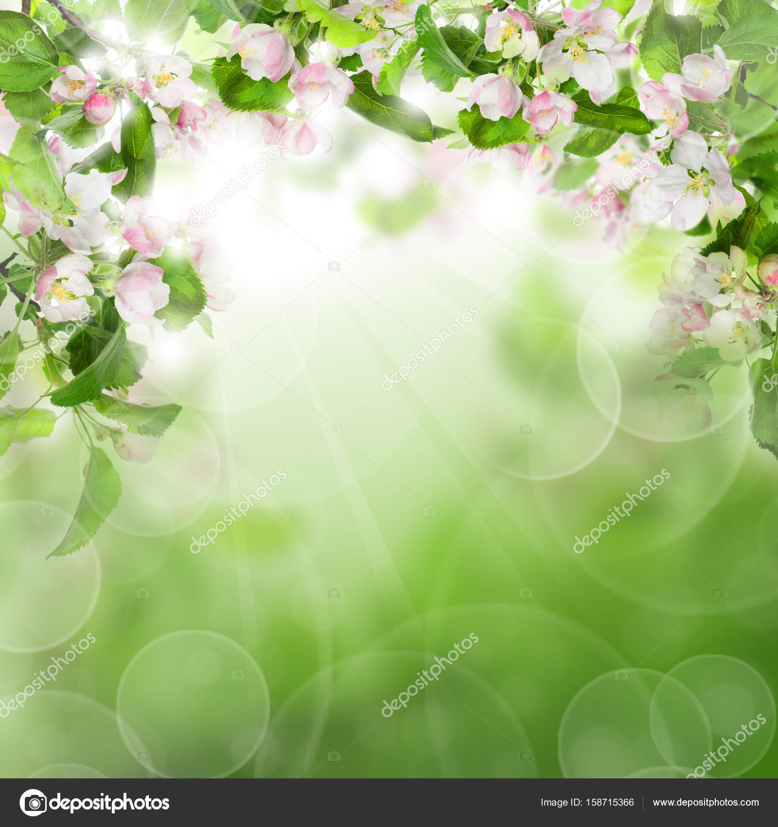 Abstract green background with white flowers green leaves and s abstract green background with white flowers green leaves and s stock photo mightylinksfo