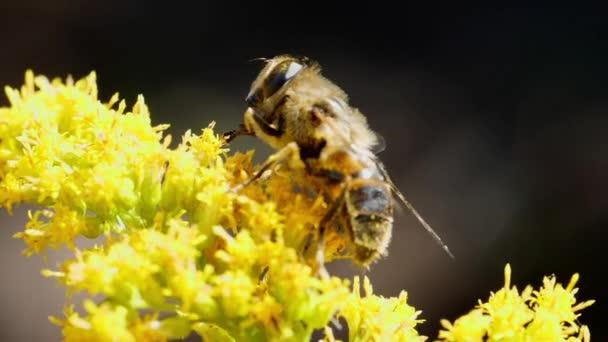 Včela na flowrs