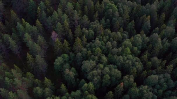 Filmový klip létající nad bujným zeleným lesem v Norsku