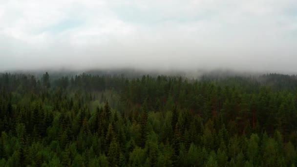 Jasná obloha a mlhavé lesní stromy v Norsku