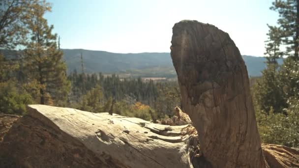 Focused Shot of Tree Trunk with Yosemite Tree Forest in Background